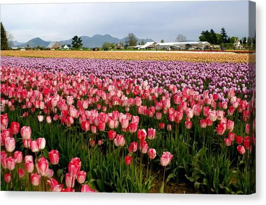 Canvas Print - Skagit Valley Tulip Festival by Sonja Anderson