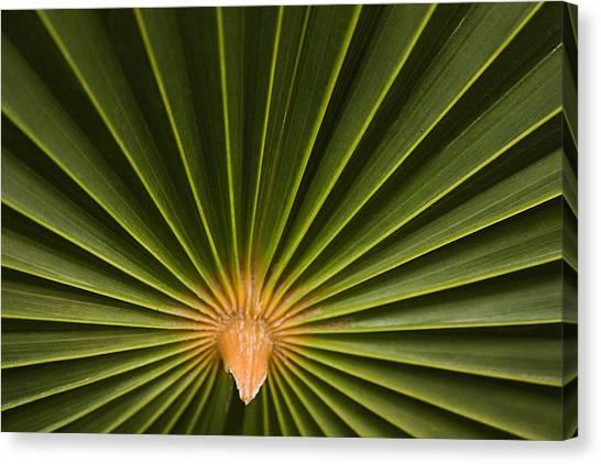 Skc 9959 Palm Spread Canvas Print