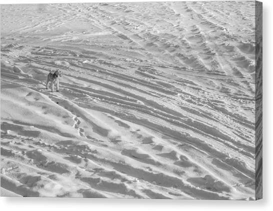 Ski Dog Canvas Print by Gunther Schabestiel