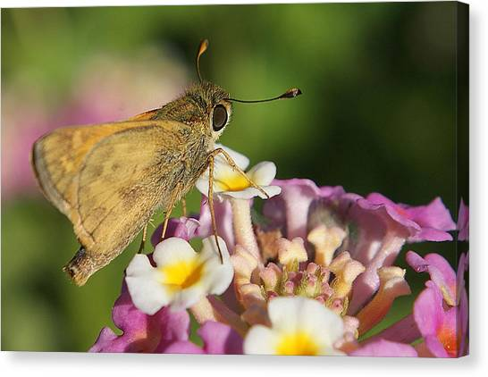 Skippers Keepers Canvas Print by DiDi Higginbotham