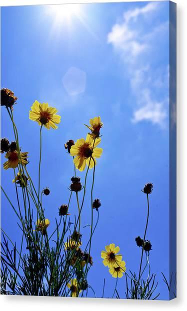 Sky Flowers Canvas Print