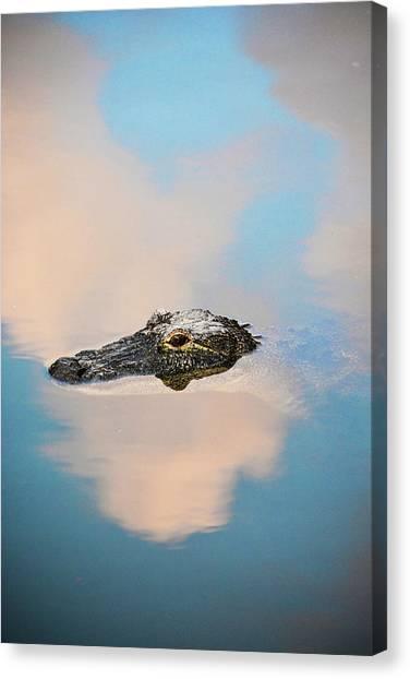 Sky Gator Canvas Print