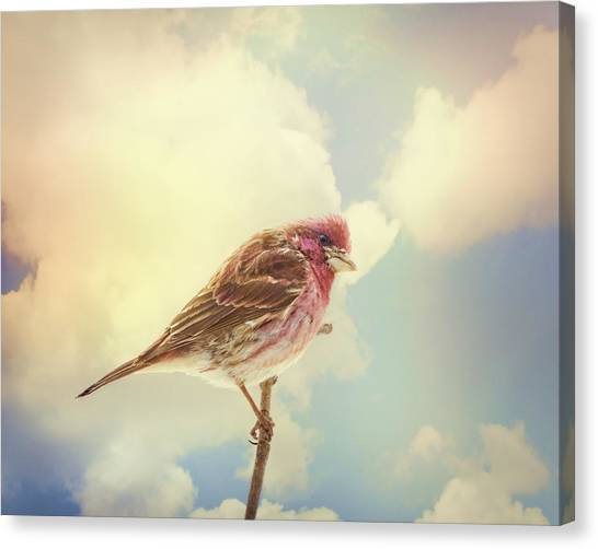 Finches Canvas Print - Sky High by Susan Capuano