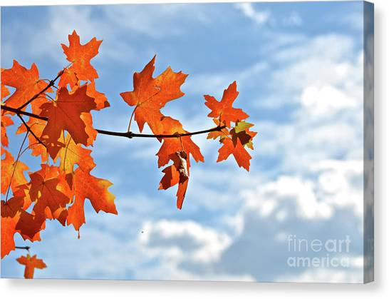 Sky View With Autumn Maple Leaves Canvas Print