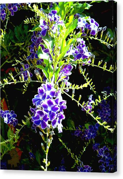 Sky Vine In Bloom Canvas Print