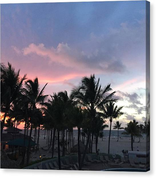 Sky With Palm Trees Canvas Print