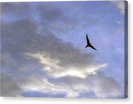 Sky16 Canvas Print by Mikael Gambitt