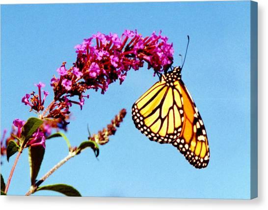 Skylands Monarch Canvas Print by Tom LoPresti
