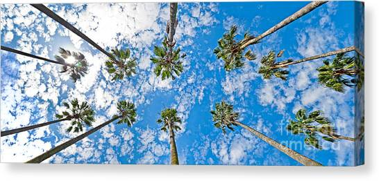 Skyward Palms Canvas Print by Az Jackson