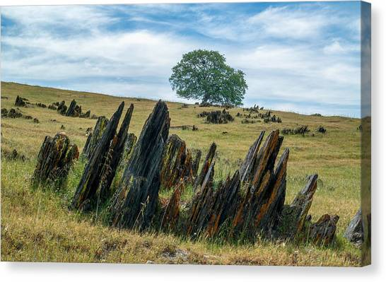 Slate Filled Meadow Canvas Print