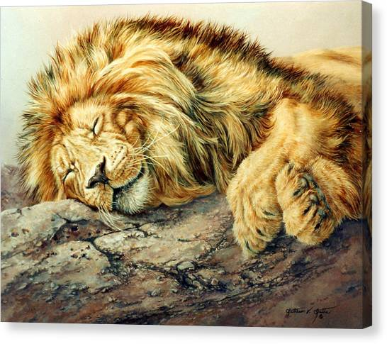 Sleeping Lion Canvas Print by Kathleen V  Butts