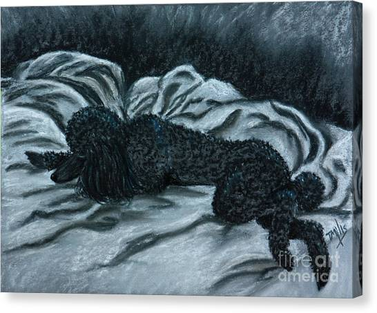 Sleeping Poodle Canvas Print