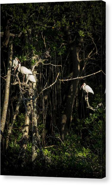 Ibis Canvas Print - Sleeping Quarters by Marvin Spates