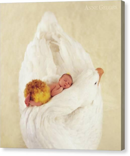 Swans Canvas Print - Sleeping Swan by Anne Geddes