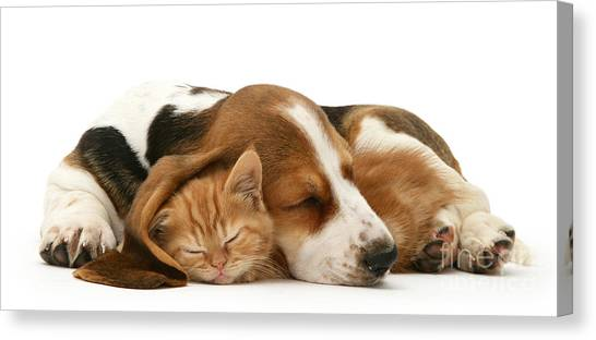 Sleepy Ginger Pals Canvas Print