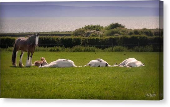 Sleepy Gypsy Afternoon By The Water Canvas Print by Elizabeth Sescilla