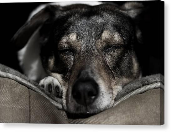 Sleepy Lil Hound Canvas Print