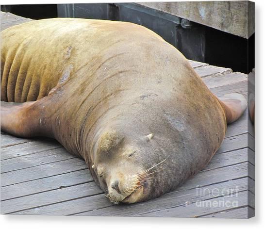 Sleepy Sea Lion Canvas Print