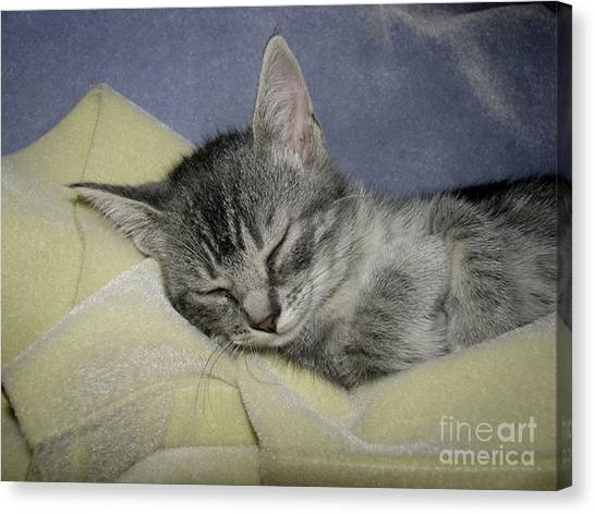 Sleepy Time Canvas Print