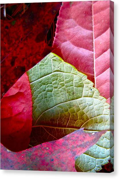 Slices Of Fall Canvas Print