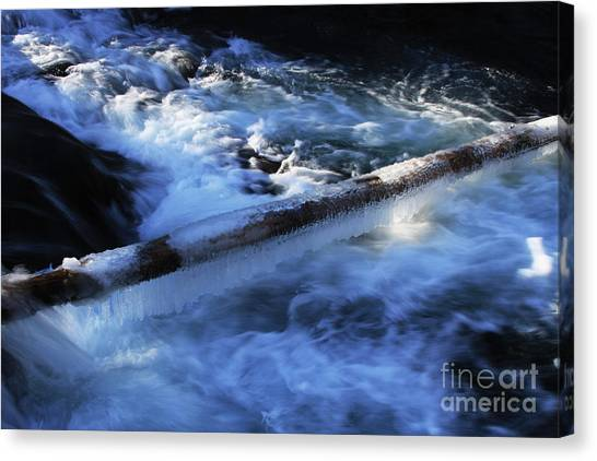 Canvas Print - Slippery Log by Gary Wing
