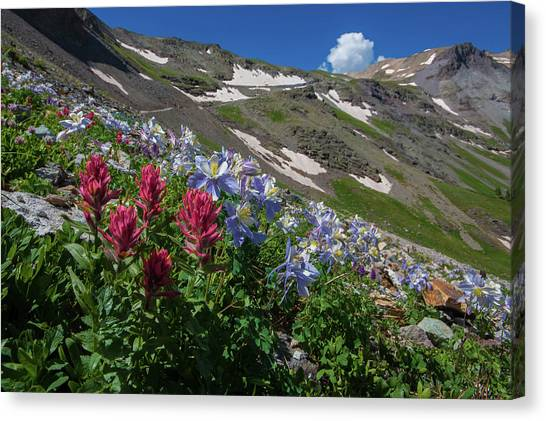 Offroading Canvas Print - Slippery Slope Of Indian Paintbrush And Columbine by Bridget Calip