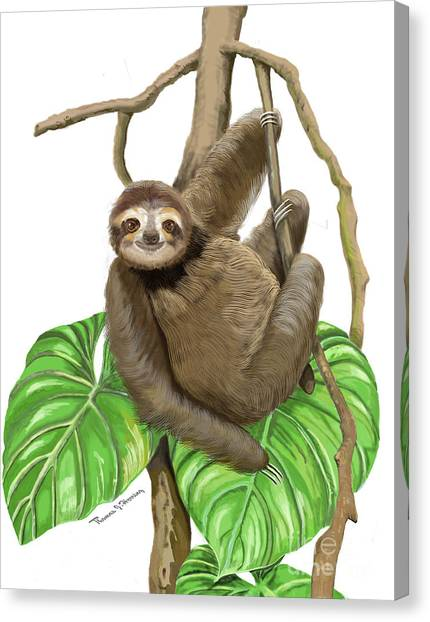 Hanging Three Toe Sloth  Canvas Print