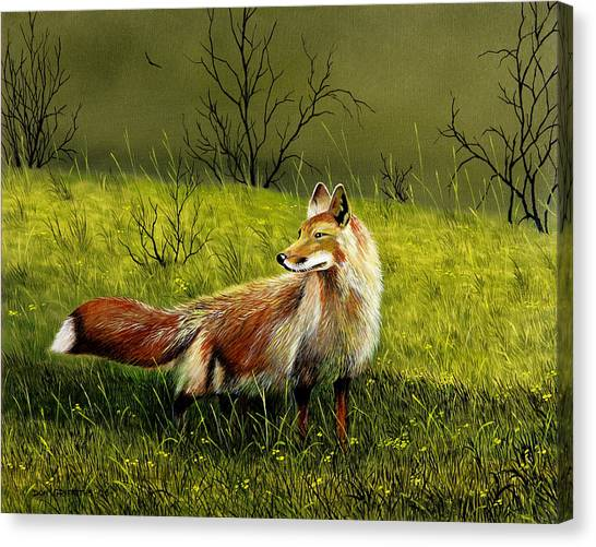 Sly Fox Canvas Print by Don Griffiths