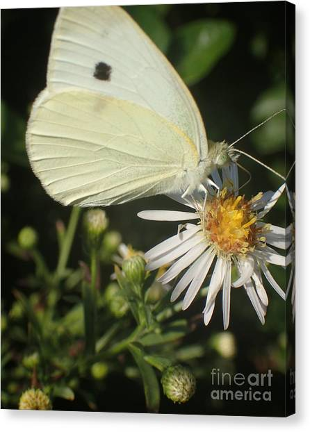 Sm Butterfly Rest Stop Canvas Print