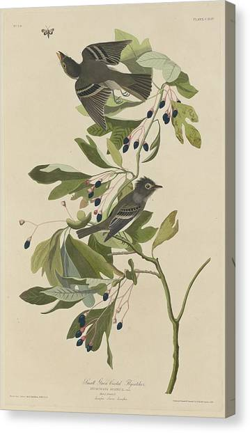Flycatchers Canvas Print - Small Green-crested Flycatcher by Dreyer Wildlife Print Collections