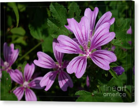 Small Mauve Flowers 6 Canvas Print