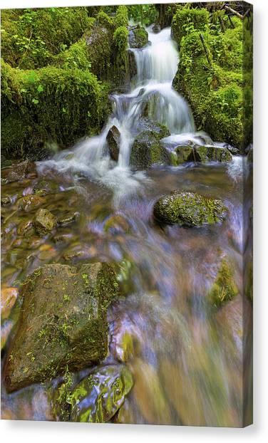 Canvas Print - Small Waterfalls Along Wahkeena Creek by David Gn