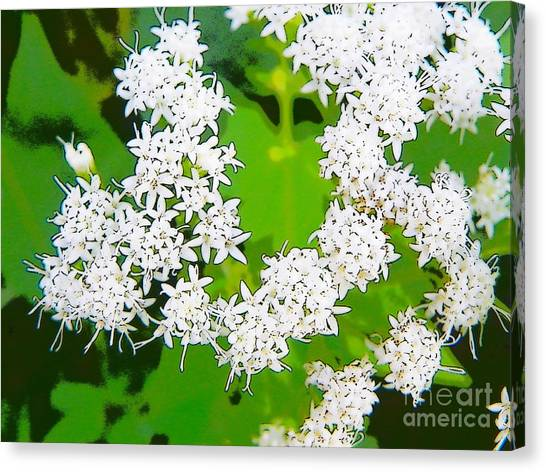 Small White Flowers Canvas Print