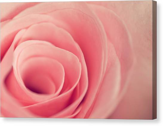 Smell The Roses Canvas Print
