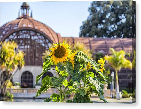 Sunflower Smile Canvas Print