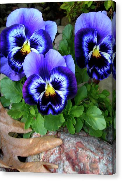 Smiling Faces Of Spring Canvas Print