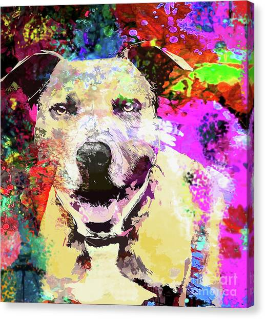Pitbulls Canvas Print - Smiling Pitbull by Jon Neidert