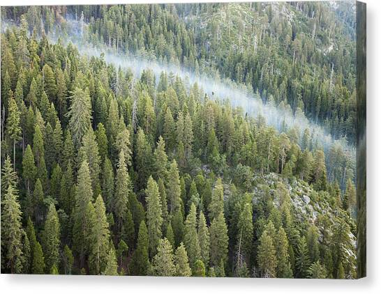 Smoke In Forest Canvas Print by Rick Pham