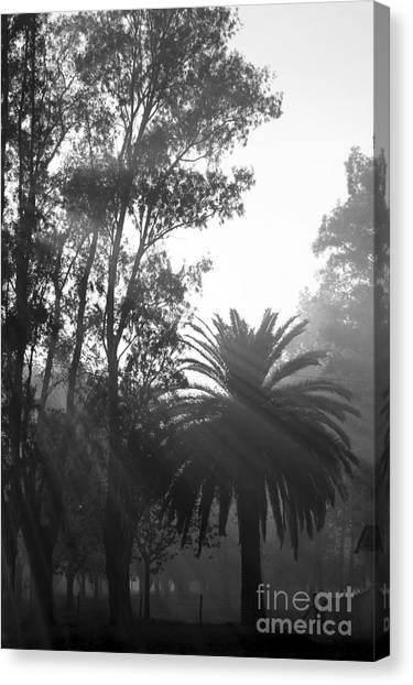 Smoky Morning Trees Canvas Print