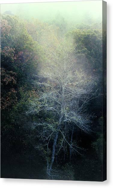 Smoky Mountain Trees Canvas Print