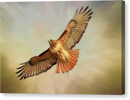 Buzzards Canvas Print - Smooth Operator by Donna Kennedy