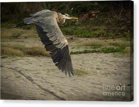 Smooth Sailing Wildlife Art By Kaylyn Franks Canvas Print