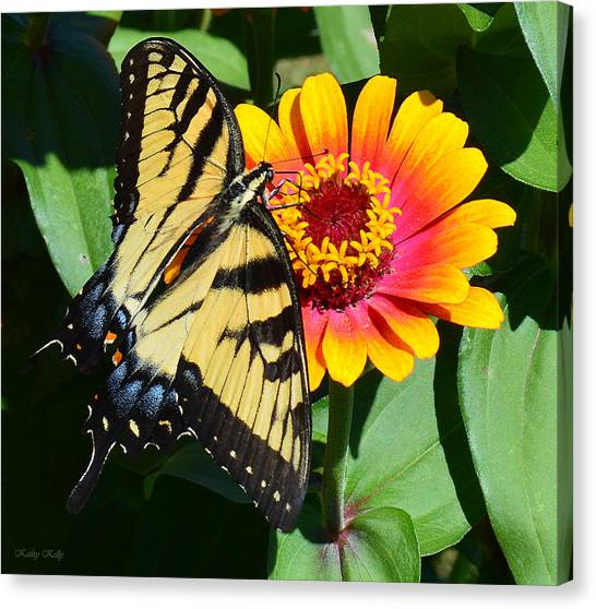 Snacking Tiger Swallowtail Butterfly Canvas Print