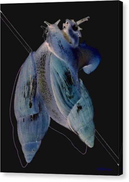 Snail Hugs Canvas Print by Debbie May