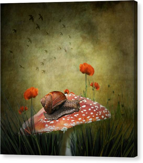 Surreal Canvas Print - Snail Pace by Ian Barber