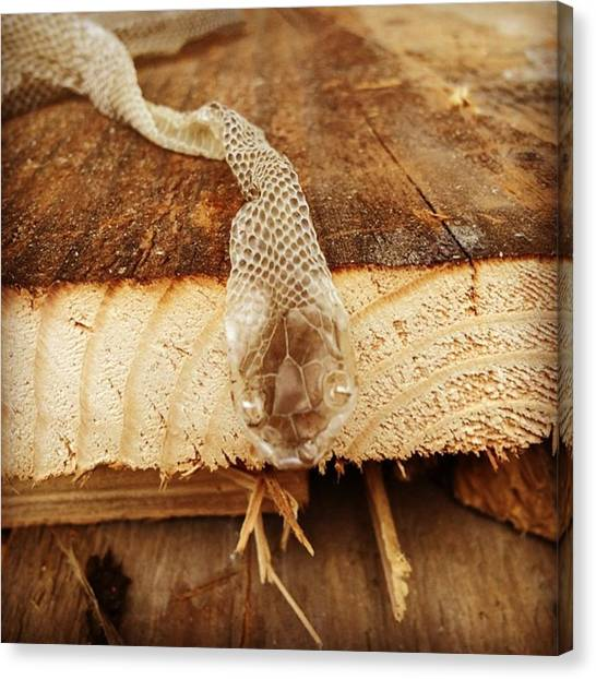 Reptiles Canvas Print - #snake #iphone #iphone5s #iphoneps by Jakub Horsky