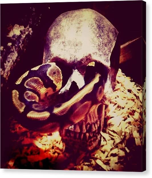 Ball Pythons Canvas Print - Snake Skull by Krystle Mccombs