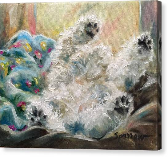 White Maltese Canvas Print - Snoozing by Mary Sparrow