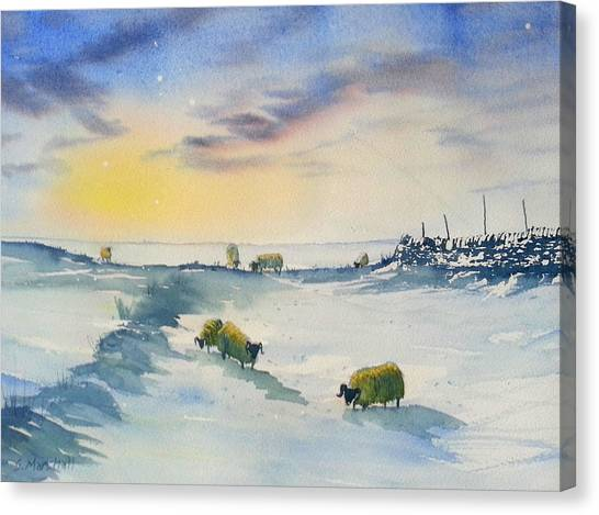 Snow And Sheep On The Moors Canvas Print