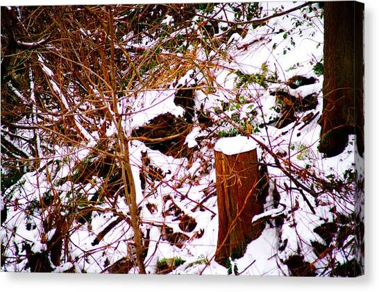 Snow And Tree Trunk Canvas Print by Paul Kloschinsky